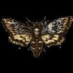 Dr Jin Ong death moth motif