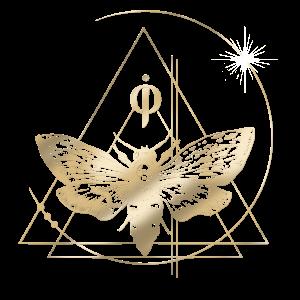 dr jin ong geometric moth logo transparent